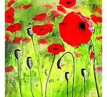Amongst the Poppies Photographic Print