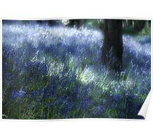 Softly Through The Bluebells Poster