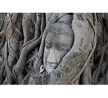 ancient buddha, ayuthaya, thailand Photographic Print