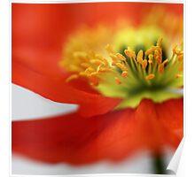 Sweet little Poppy... Poster