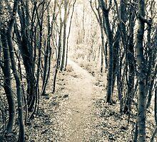 The Path by Rhys Herbert