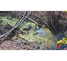 Green Stream In Spring Photographic Print