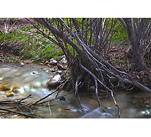 Dry Saplings Over The Stream Photographic Print
