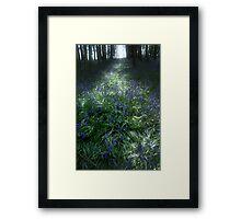 Bluebell Light Framed Print