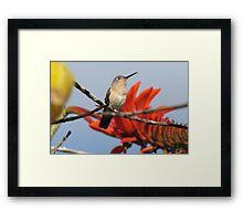 Buffy Hummingbird 2 Framed Print