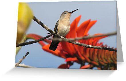 Buffy Hummingbird 2 by hummingbirds