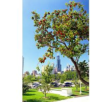 Red blossom tree in Chicago  Photographic Print