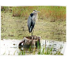 Great Blue Heron - Broken Cup Poster