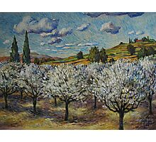 Orchard with White Blossoms Photographic Print
