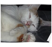 Snugglie and sleeping Poster