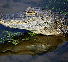 Ally the Alligator in my Pond by Paulette1021
