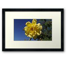 Yellow Rose Brings Sunshine Framed Print
