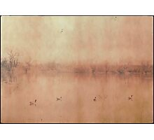 Four Geese Photographic Print