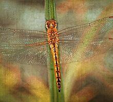 Golden Skimmer by Bonnie T.  Barry