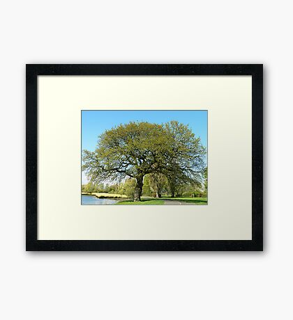 My Tree! Southampton, UK Framed Print