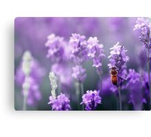 Bee in Lavender Canvas Print