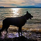 Zeus' Shadow by •Kim Reiten•