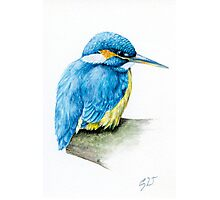 River Kingfisher Photographic Print