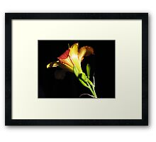 A daylily / 'n Daglelie uit my tuin Framed Print