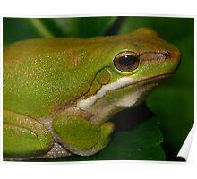 Metalic Frog Poster