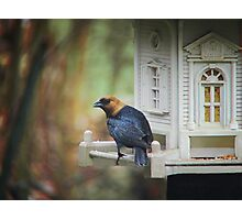 Cowbird - Male Photographic Print