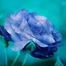 Rose of Blue by Pat Moore