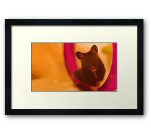 JoJo the Syrian Hamster Framed Print