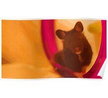 JoJo the Syrian Hamster Poster