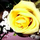 His Yellow Rose of Texas (In Memory of Betty) by Charldia