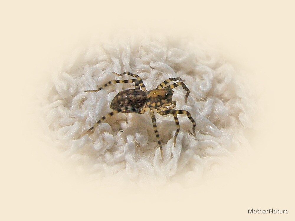 Along Came A Spider by MotherNature