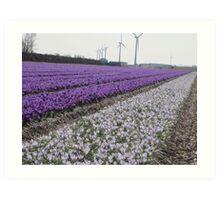 Bulb Fields of North Holland Art Print