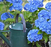 Blue Hydrangeas by Lisa  Morris