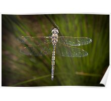 Dragon fly 3 Poster
