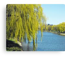 Not Weeping Today Canvas Print