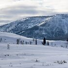 Yellowstone Landscape by Will Hore-Lacy