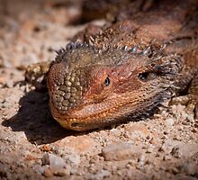 Lizard by wildrider58