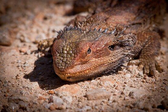 Lizard by wildrider58
