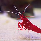 Crayfish by rachomini