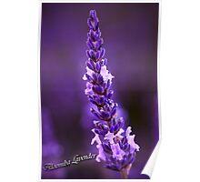 Aloomba Lavender Poster