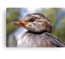 I'm A Water Bird. - Juvenile Grebe.  Canvas Print
