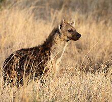 Spotted Hyena, Serengeti National Park, Tanzania. by Carole-Anne