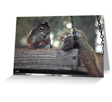 The Bird Feeder Brawl Greeting Card