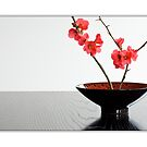 Bowl With Japonica (Card) by prbimages