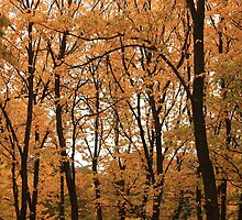 Autumn in Arrowtown by EblePhilippe