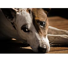 Waffy Dog Photographic Print
