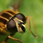 Bug-Eyed by Carl Revell
