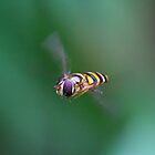 HoverFly1 by Dustinit
