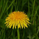 Just Dandy! by Meladana