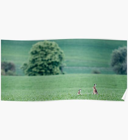 Hares in the landscape Poster
