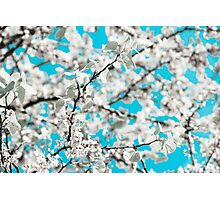 soft spring Photographic Print